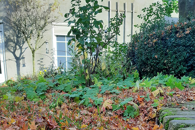 Dutch-Quality-Gardens-Hans-Linders-tuinonderhoud
